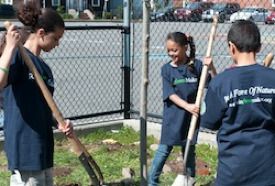 Plant Trees in Roxbury, MA